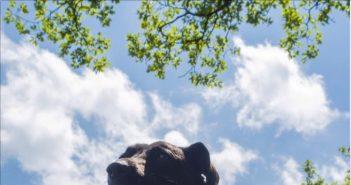 Calendari 2019 del CentroSoccorsoAnimali MODENA! Passiamo 12 mesi con lo splendido sorriso dei cani del rifugio!